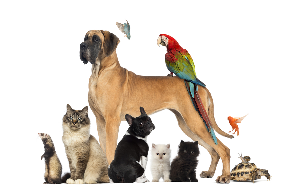 Allowing pets in rental property